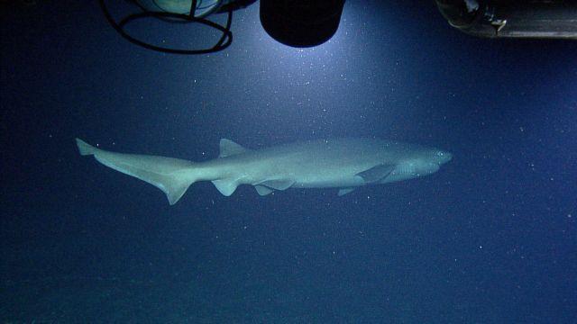 Καρχαρίες -  φαντάσματα ζουν στο ηφαίστειο  της Νισύρου! | tanea.gr