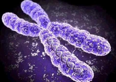 Τεστ DNA δείχνει αν θα περάσουμε τα 100 | tanea.gr