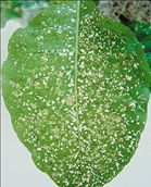 Τρύπα του όζοντος στις καλλιέργειες | tanea.gr
