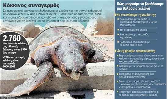 Δίχτυα-φονιάδες για τις χελώνες | tanea.gr