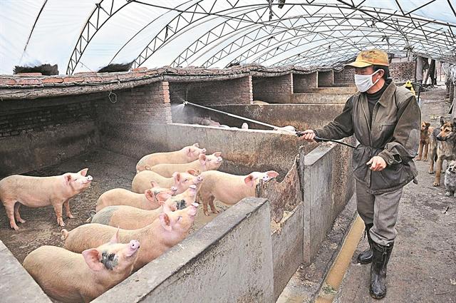 Η πανώλη στην Κίνα εκτοξεύει το χοιρινό | tanea.gr