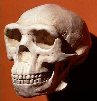 Έξι σκελετοί ξαναγράφουν τη θεωρία για την ανθρώπινη εξέλιξη   tanea.gr