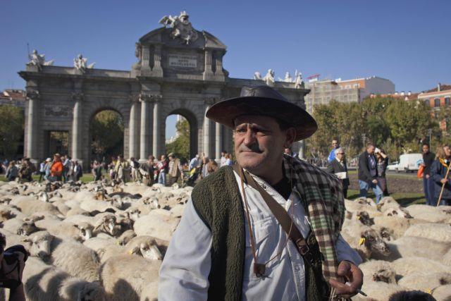 Παρέλαση με... πρόβατα και αγελάδες στη Μαδρίτη | tanea.gr