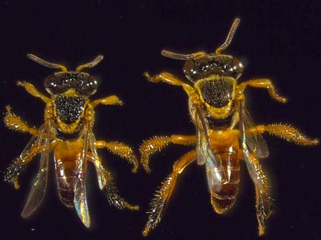 Μέλισσες - στρατιώτες στην είσοδο  της κυψέλης εμποδίζουν τους κλέφτες | tanea.gr