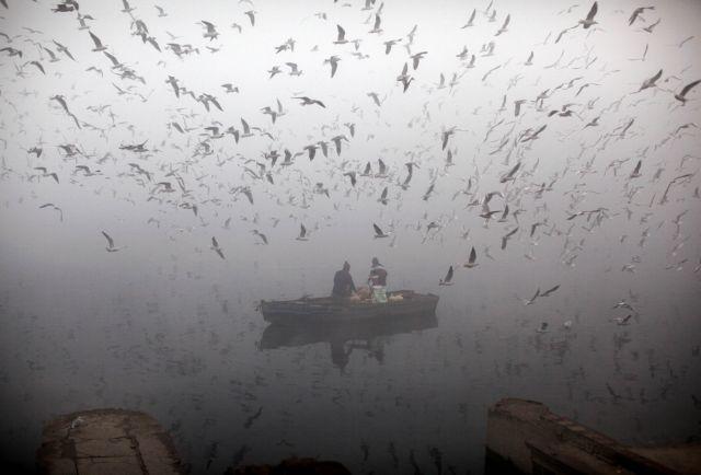 Βαρκάδα στην ομίχλη με φτερωτή συντροφιά | tanea.gr
