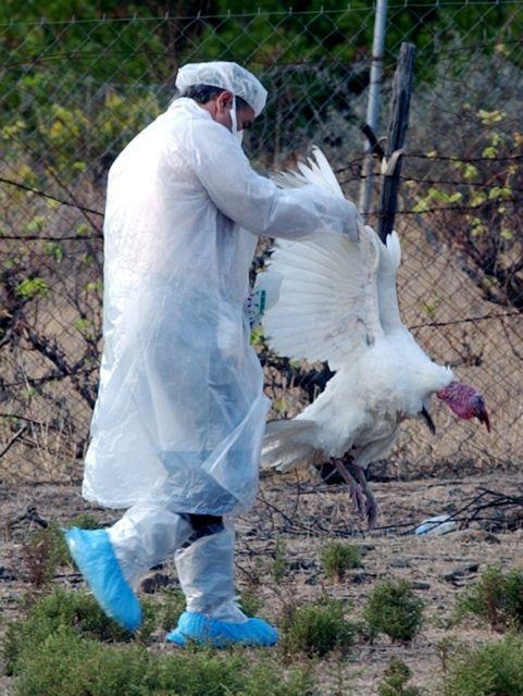 Δεν μεταδίδεται από άνθρωπο σε άνθρωπο ο ιός της γρίπης των πτηνών | tanea.gr