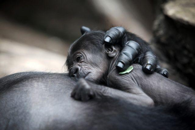Στην αγκαλιά της μαμάς | tanea.gr