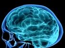Ο εγκέφαλος «βλέπει» τις γυναίκες σε... δόσεις | tanea.gr