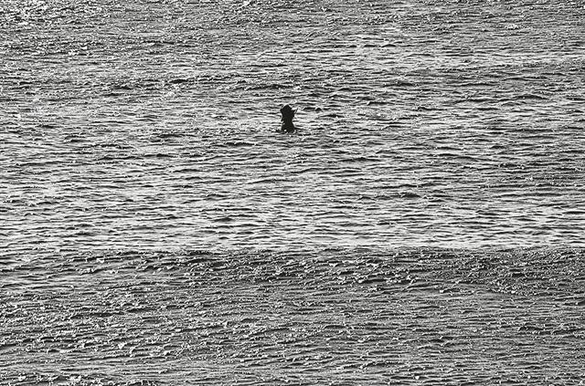 «Κολυμβητές» στον φακό και τον καμβά | tanea.gr