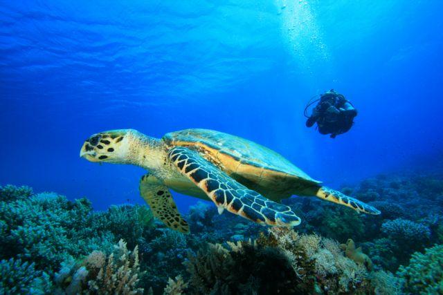 Με χελώνες και καρχαρίες | tanea.gr