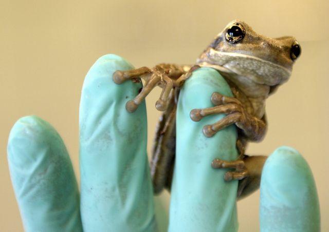 [Κλικ] Λαθρεπιβάτης βάτραχος | tanea.gr
