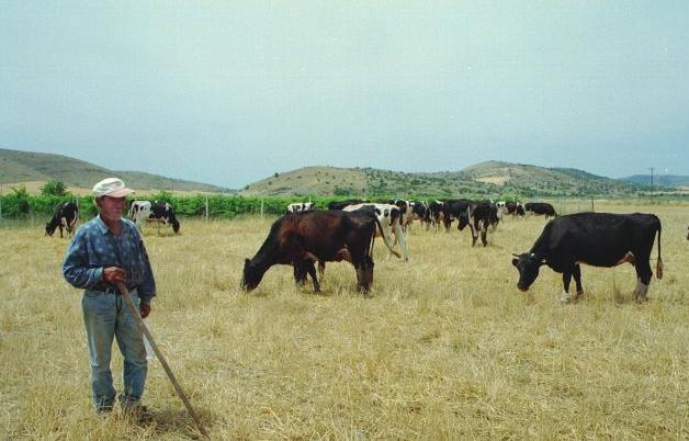 Ενισχύσεις 35 εκατ. ευρώ στους κτηνοτρόφους ορεινών περιοχών | tanea.gr