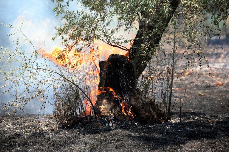 Σε ύφεση η πυρκαγιά στο Πόρτο Ράφτη Αττικής | tanea.gr