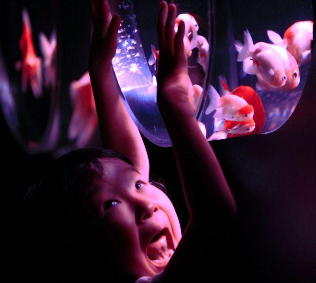 Ψάρια και φως   tanea.gr