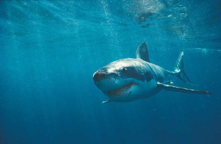 Τρόμος στον παράδεισο του Ινδικού: καρχαρίας κατασπάραξε 15χρονη | tanea.gr