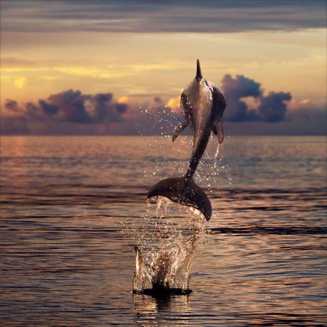 Τα δελφίνια έχουν το δικό τους όνομα! | tanea.gr