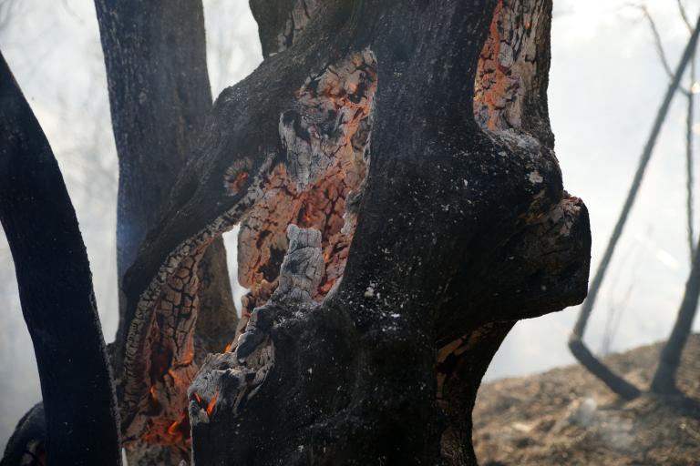 Υπό μερικό έλεγχο πυρκαγιά στο Πανόραμα Βούλας | tanea.gr