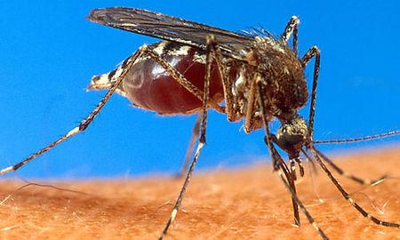 Ο ιός του Δυτικού Νείλου σε… σίριαλ | tanea.gr
