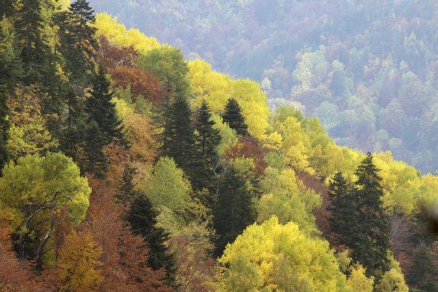Να αποσύρει το νομοσχέδιο για τα δάση, καλεί την κυβέρνηση η WWF Ελλάς | tanea.gr