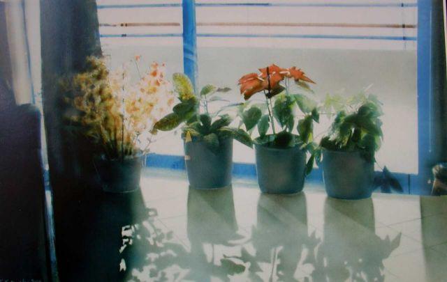 Οι γλάστρες στο γραφείο αυξάνουν παραγωγικότητα - δημιουργικότητα   tanea.gr