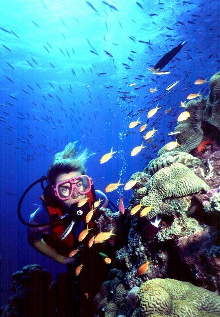 Μία τράπεζα σπέρματος για κοράλλια   tanea.gr