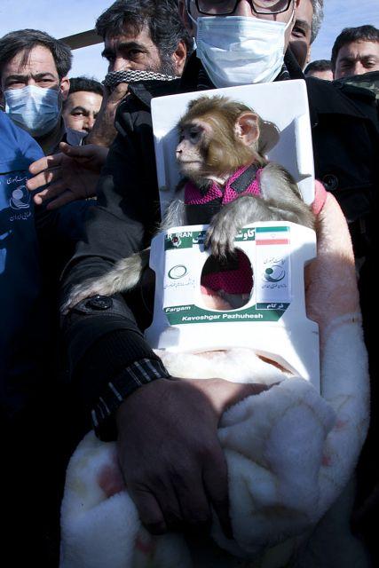 Η μαϊμού του Διαστήματος   tanea.gr