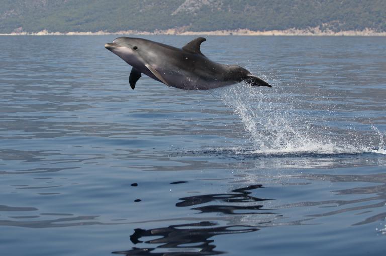 Νεκρό δελφίνι σε παραλία της Ξάνθης - Πυροβόλησαν λύκο στην Εορδαία | tanea.gr