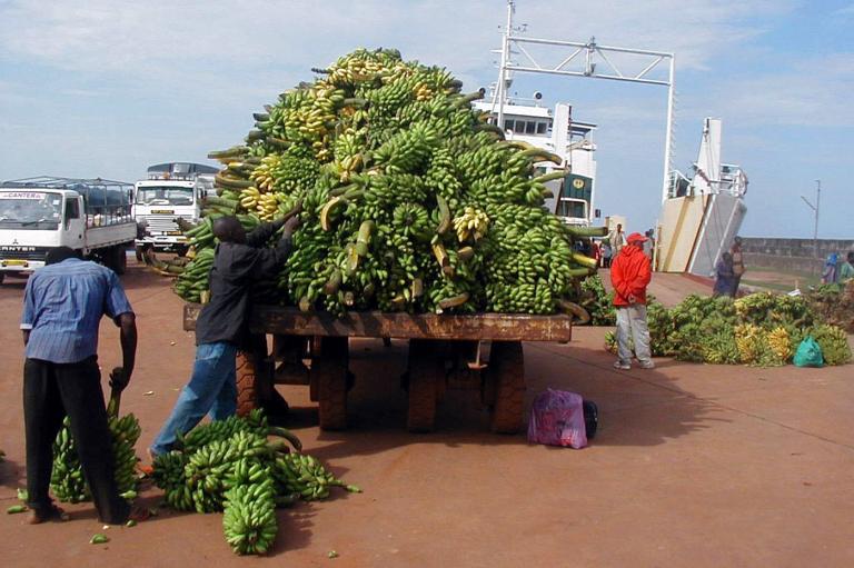 Εντόπισαν στο τελωνείο Πειραιά 87 τόνους μπανάνες ακατάλληλες για κατανάλωση | tanea.gr