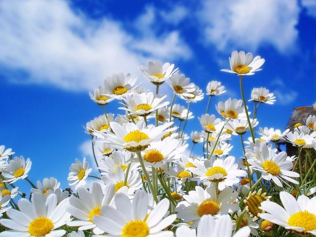 Ενα φιλί και λουλούδια το καλύτερο δώρο αγάπης | tanea.gr