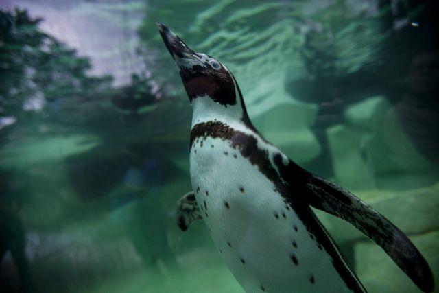 Βρετανία: Δίνουν αντικαταθλιπτικά στους πιγκουίνους για να αντιμετωπίσουν τις άσχημες καιρικές συνθήκες   tanea.gr