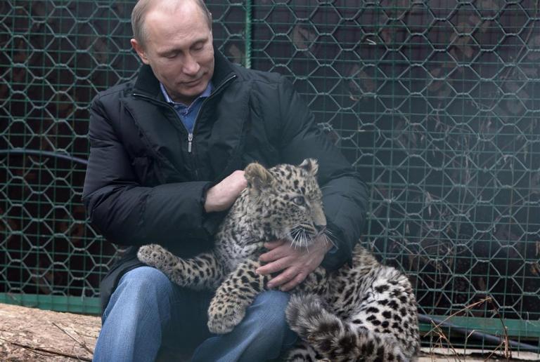 Η λεοπάρδαλη «ήθελε» τον Πούτιν, αλλά όχι άλλους μέσα στο κλουβί | tanea.gr