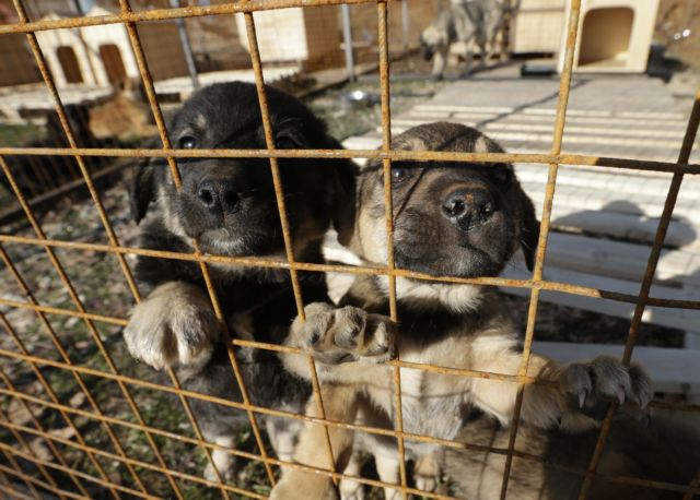 Ρώσος μεγιστάνας έσωσε τους αδέσποτους σκύλους στο Σότσι   tanea.gr