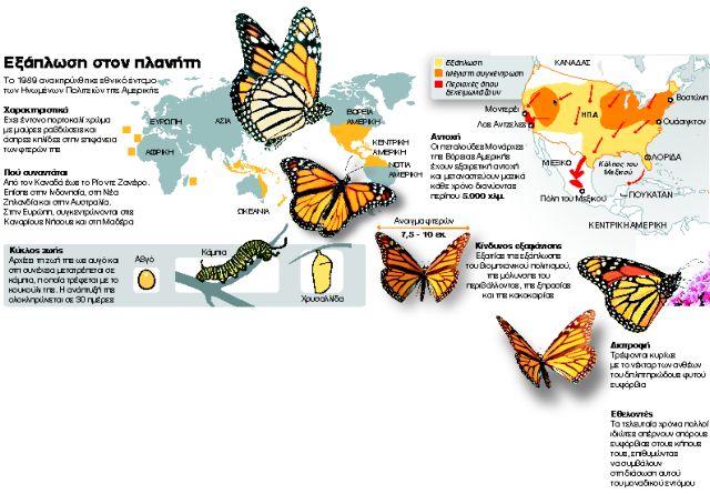 Πρόεδρε Ομπάμα, σώστε την πεταλούδα Μονάρχη   tanea.gr