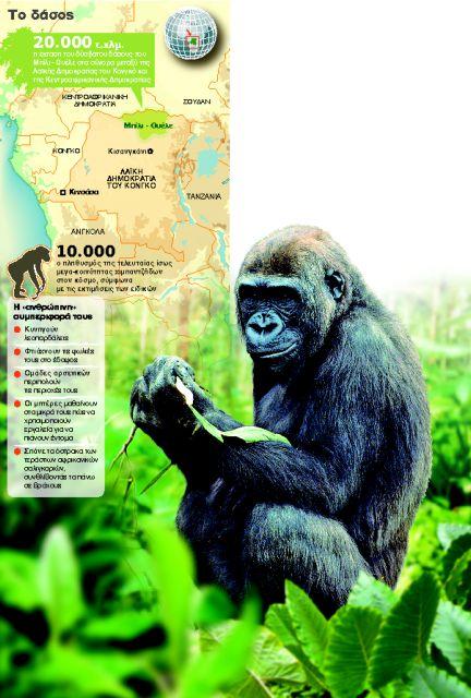 Το βασίλειο των πιθήκων στο Κονγκό | tanea.gr