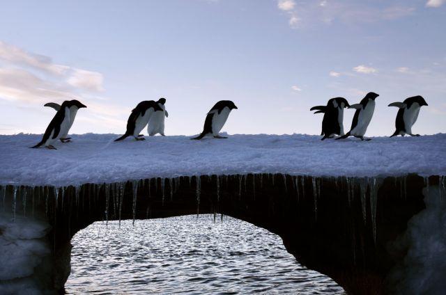SOS για την Ανταρκτική από το Διάστημα | tanea.gr