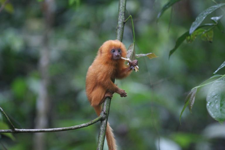 «Σε εξέλιξη» η έκτη μαζική εξαφάνιση ειδών στον πλανήτη Γη | tanea.gr