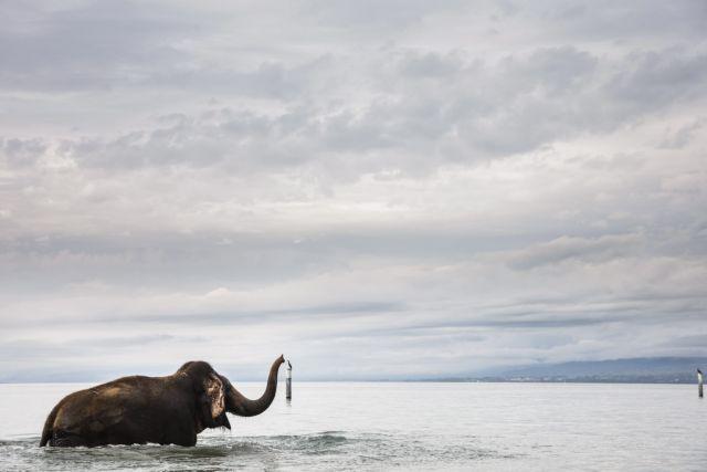 Οι ελέφαντες ακούνε τη βροχή από απόσταση εκατοντάδων χλμ! | tanea.gr