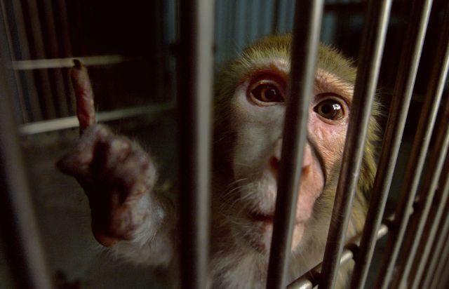 Ινδία: Μαϊμού ορίζεται μοναδική κληρονόμος εύπορου ζευγαριού | tanea.gr
