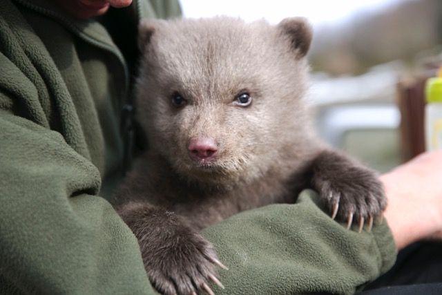 H iSquare υποστηρίζει την ανατροφή του Πάτρικ, της ορφανής μικρής αρκούδας του Αρκτούρου   tanea.gr