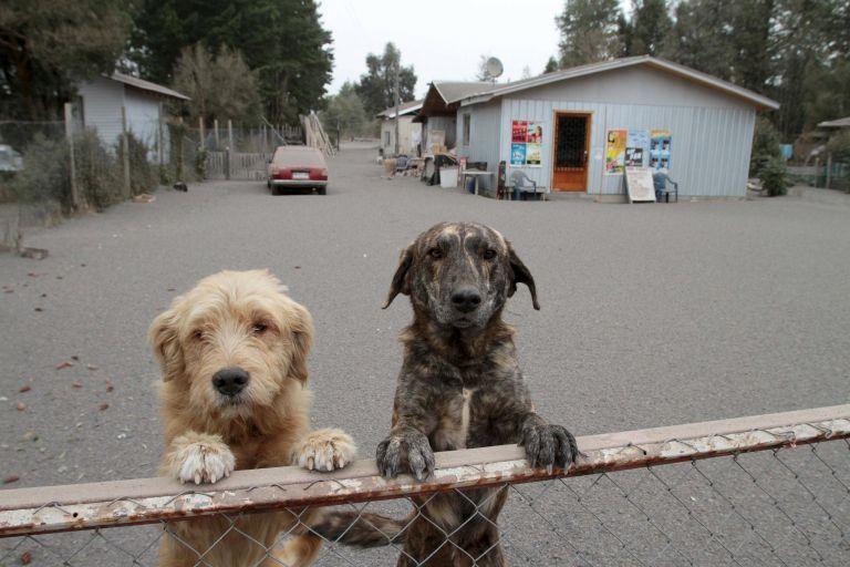 Μια «αστυνομία για τα ζώα» θα λειτουργήσει πειραματικά στη Νορβηγία | tanea.gr