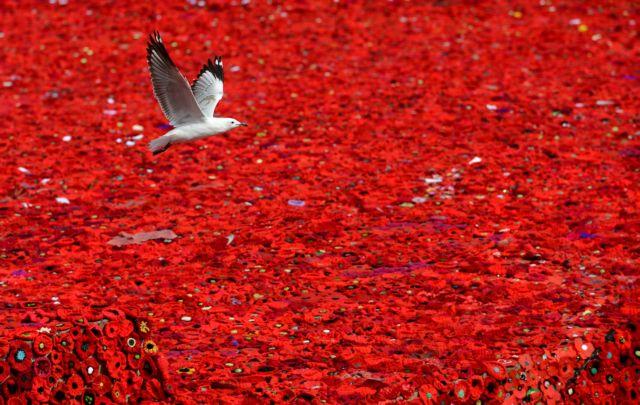 [Κλικ] Η κόκκινη θάλασσα της μνήμης   tanea.gr