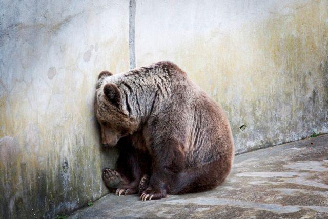 Θεσσαλονίκη: Τέλος οι λύκοι και οι αρκούδες από τον Ζωολογικό Κήπο   tanea.gr