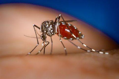 Τα γονίδια καθορίζουν αν θα μας τσιμπούν τα κουνούπια   tanea.gr