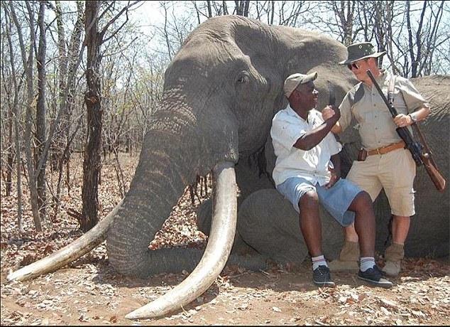 Ζιμπάμπουε: Αυτήν τη φορά ήταν η σειρά του επιβλητικού ελέφαντα με τους τεράστιους χαυλιόδοντες   tanea.gr