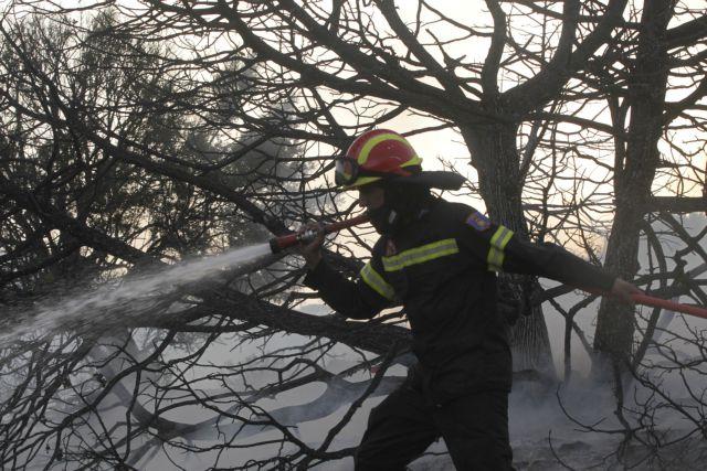 Τεράστιες καταστροφές απο τη μεγάλη πυρκαγιά στις περιοχές Ανατολής και Μύρτου της Ιεράπετρας Λασιθίου | tanea.gr