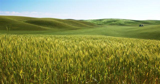 ΟΗΕ: Οι ακραίες καιρικές συνθήκες προκαλούν αύξηση των τοξινών στις καλλιέργειες | tanea.gr