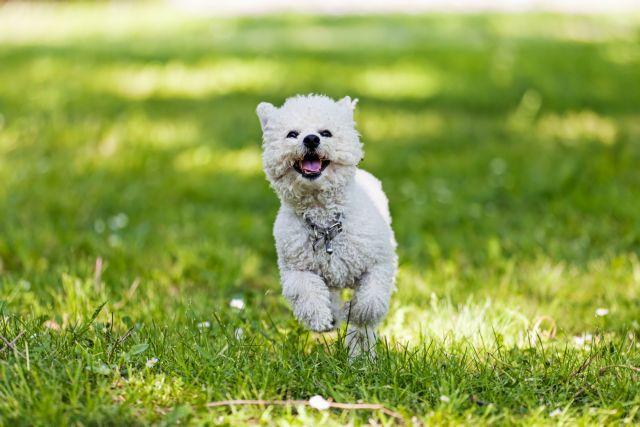Προσοχή: ο σκύλος σας καταλαβαίνει τι λέτε | tanea.gr