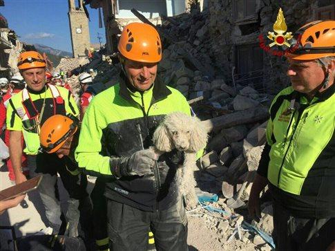 Ιταλία: Διάσωση σκύλου που άντεξε 30 ώρες κάτω από τα ερείπια | tanea.gr