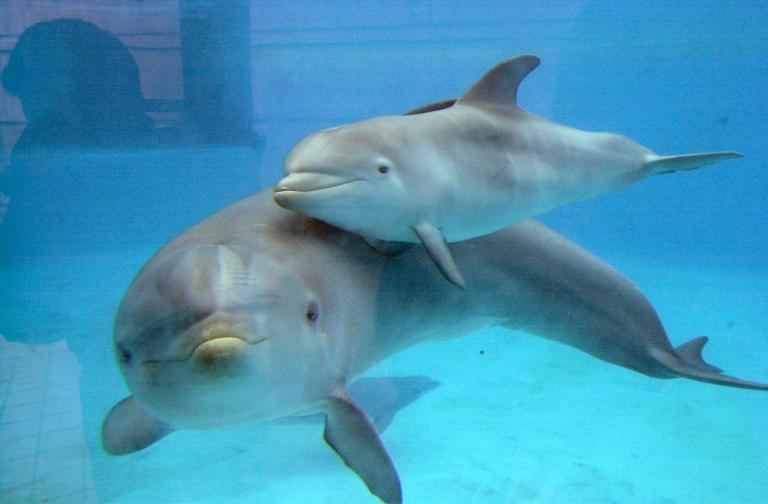 Τέσσερα δελφινάκια από τη Φινλανδία στον ζωολογικό κήπο της Αθήνας | tanea.gr