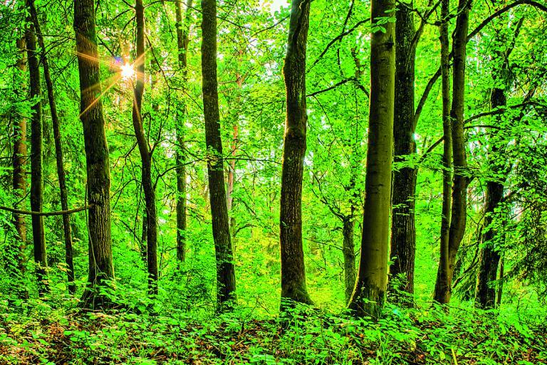 Παρατείνεται η πρόσκληση υποβολής αντιρρήσεων στους δασικούς χάρτες | tanea.gr
